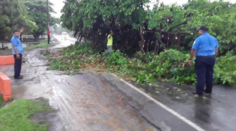 En la carretera hacia el municipio de Nandaime se desplomó un hermoso árbol de Chilamate de unos 15 metros de altura. En tanto en el sector de Mira Lago otro Chilamate se vino al suelo, cayendo algunas de sus ramas en dos viviendas sin reporte de daños humanos.