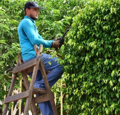 Podando árboles en el parque Central de Nagarote