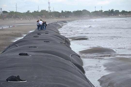 Geo contenedores en Corinto para salvaguardar a las familias de inundaciones y  la erosión de la costa, proyecto del gobierno central de  54 millones de córdobas