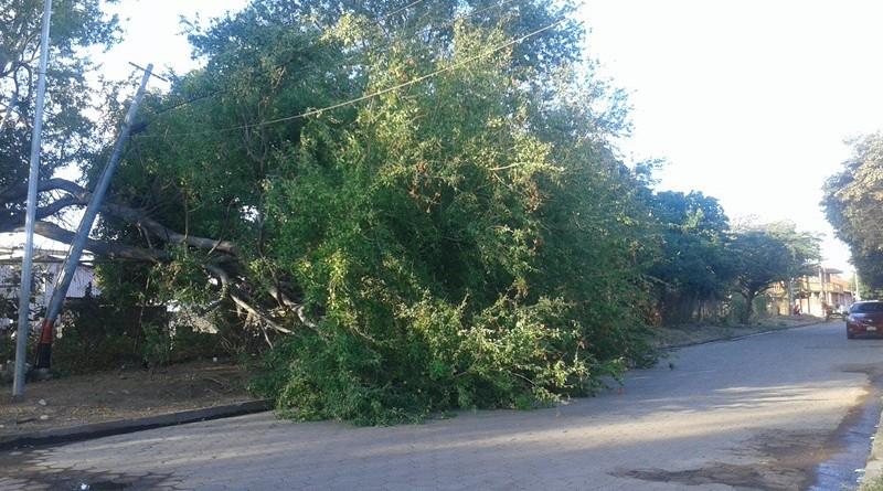 Los fuertes vientos derriban los árboles que pueden provocar incidencias en las vías y en las viviendas