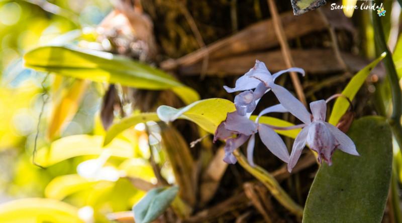 Ruta de Las orquídeas en Miraflor