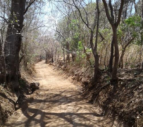 Camino rural Los Hidalgos  en El Crucero