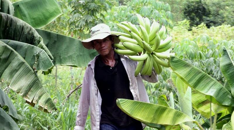 Equipos municipales apoyan  más producción de alimentos