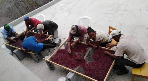 Con tecnología aplicada a la producción se han logrado variedades de semilla de frijol de períodos más cortos