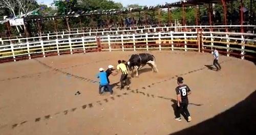 Sorteando los toros en la comunidad Las Azucenas , San Carlos