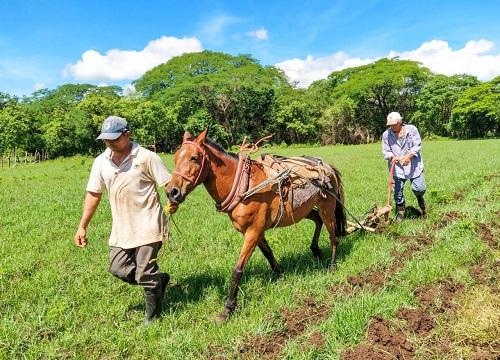 Los pequeños productores garantizan la producción de granos básicos