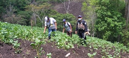 Miembros del equipo municipal de  La Concordia  en un plantío de papa y frijoles en la comunidad San Ramón