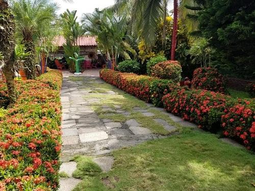 El  bonito jardín de  la señora Elsi Murillo  en Nueva Guinea