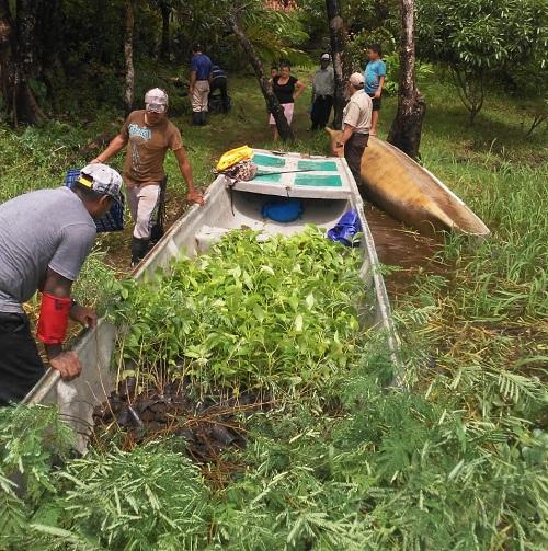 San Juan del Norte: Alcaldía y Marena entregan mil 200 árboles de roble y Guanacaste a familias de la comunidad La Cangrejera para cercas vivas.