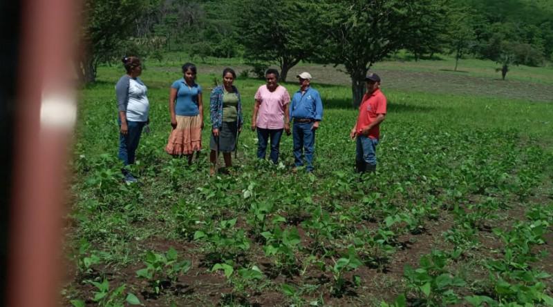 Visita al banco de semilla en Los Limones Puerto Morazán