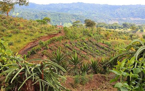 Campos sembrados (foto archivo)