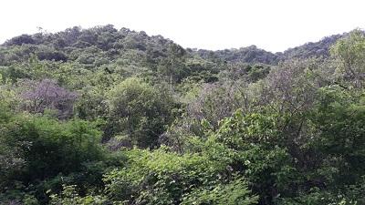 San Lorenzo: Construcción de parque ecológico municipal en el Cerro Tecolostote.