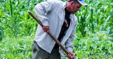 cultivasebaco