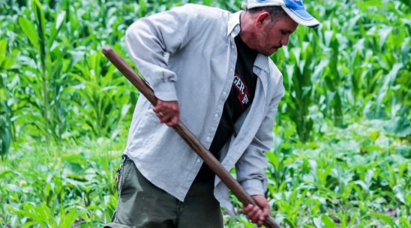 Coherencia en  planificación nacional y planes municipales clave del éxito en actividad agropecuaria del país
