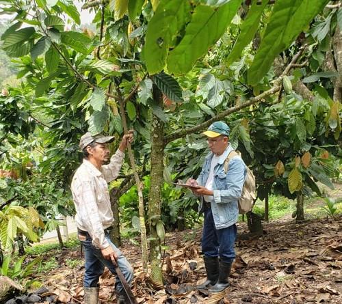 En Rancho Grande en cultivos de cafécacao yfrutales