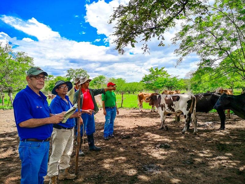 Pequeños ganaderos del caserío Gúasimo, comarca Las Mercedes, El Sauce (Foto Kevin Rivas)