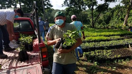 Plantas del vivero de la alcaldía para reforestar La Chorrera