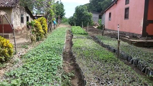 Vivero de hortalizas
