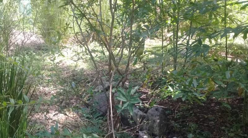 Un bosquecito de granate abriga la reserva, con cuyo fruto,  ha agregado un  pequeño emprendimiento: La miel cardio combinado con miel de abejas para  la salud cardiovascular y resfriados persistentes