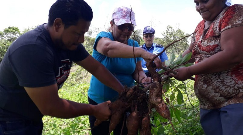 Productores de yuca en encuentro promovido por Sistema de Producción de Granada