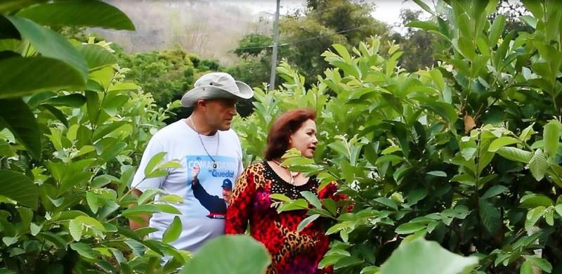 Martha Mairena y Michael Huska, supervisan su plantío sembrado de guayabas