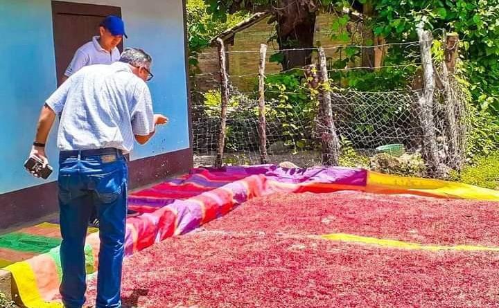 Asoleando frijoles en la comunidad  de Salales, observa Lester Gutiérrez del Mefcca de El Sauce