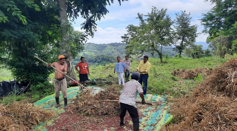 El alcalde y vice alcaldesa de San Lorenzo, Marcos Antonio Sandoval y   Mercedes del Socorro Suazo visitan a productores de Potrero Platanal quienes ya están aporreando frijoles en el campo.