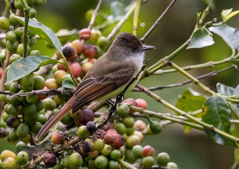 Reserva Silvestre Privada El Jaguar: Las aves son su mayor atractivo. Cuenta con albergue y servicios de alimentación,.