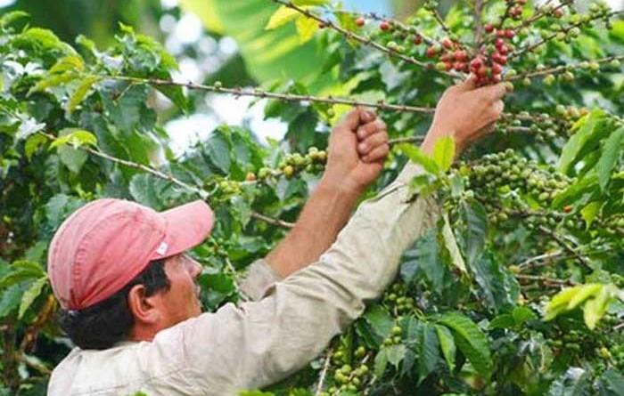 Nicaragua con los mejores resultados económicos en Centroamérica con su producción y exportaciones