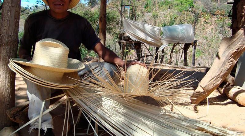 Los sombreros de palma real para adultos y niños son autóctonos de Totogalpa, sus estilos los identifica de otros. Cayantú es la cuna, allí también cultivan la materia prima.