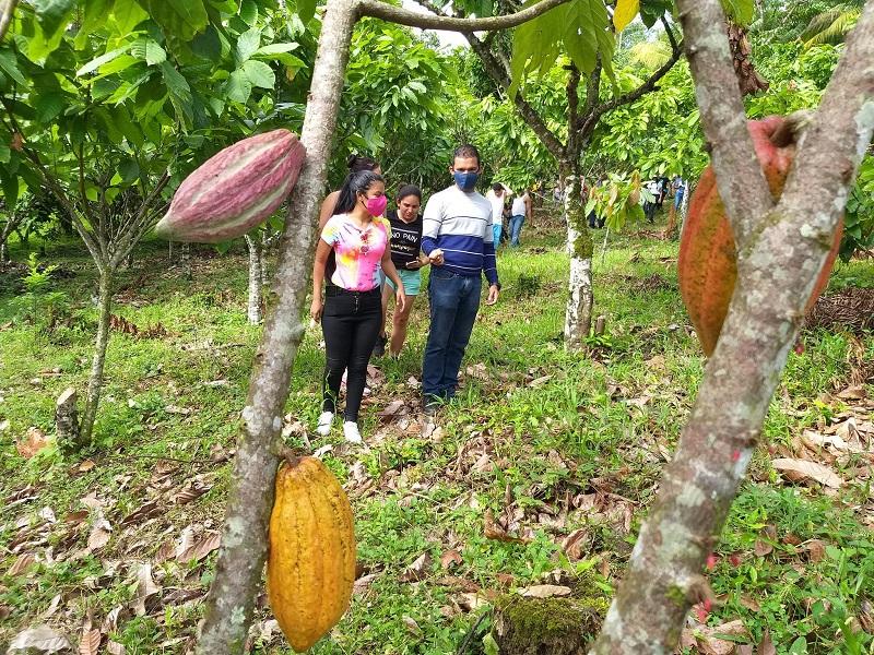 En el cacaotal  observando las plantas y viveros