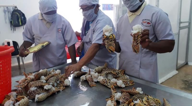Gran peso de acuicultura y pesca artesanal en la canasta exportadora destaca titular de Hacienda en sesión de alcaldes.