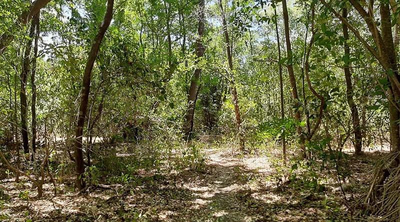 El Parque ecológico municipal El Bosque Limón, con senderos naturales posee variada flora y fauna y estructuras rocosas, invita a conocerlo para la interacción más directa con la naturaleza. Cercano hay un estero para pescar y pasear en bote en un recorrido por el área boscosa.