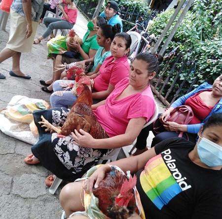 En el mercado local: participantes del concurso el gallo y gallina más gorda