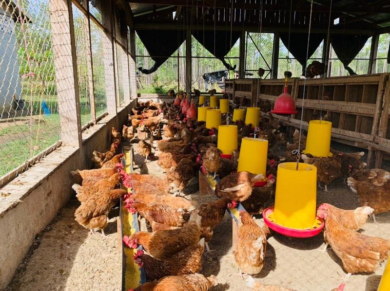 Granja avícola Los Pinares en Waspán