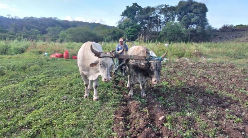Gobiernos locales, y productores aran juntosel camino de la paz que llevará al éxito el ciclo agrícola 2021-2022