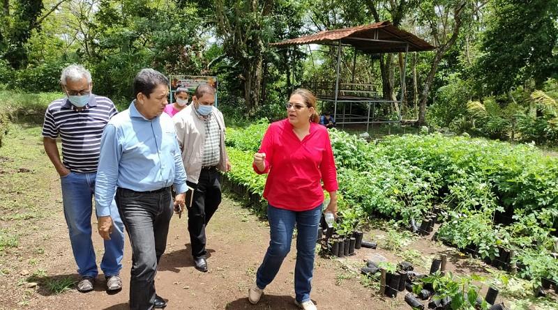 El vivero también   abastece de plantas el trabajo coordinado de las instituciones del Sistema Nacional de Producción y Consumo
