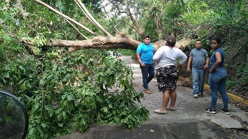 Los fuertes vientos y la sedimentacion  provocan caída de los árboles (Foto archivo: Miembros de Comupred ayudan en la comuniadd Los Ríos en Ticuantepe)